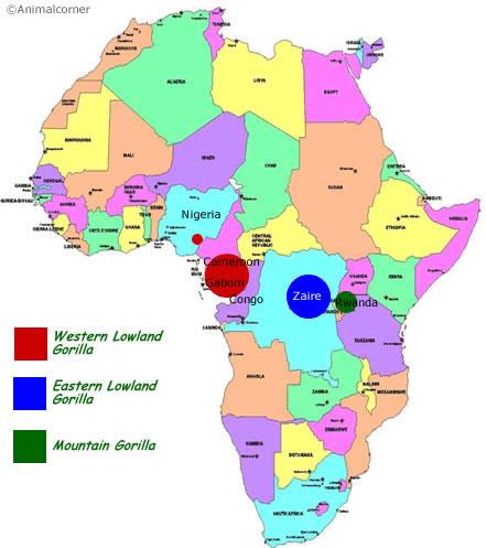 Gorilla Range Map