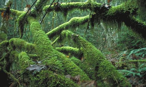 Rainforest Understorey