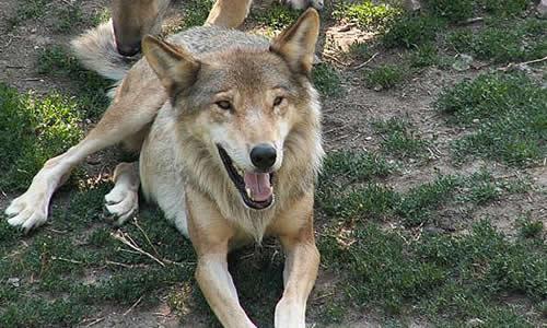 Animals in Italy - listofcountriesoftheworld.com