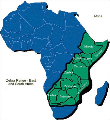 Zebras - Facts, Diet & Habitat Information