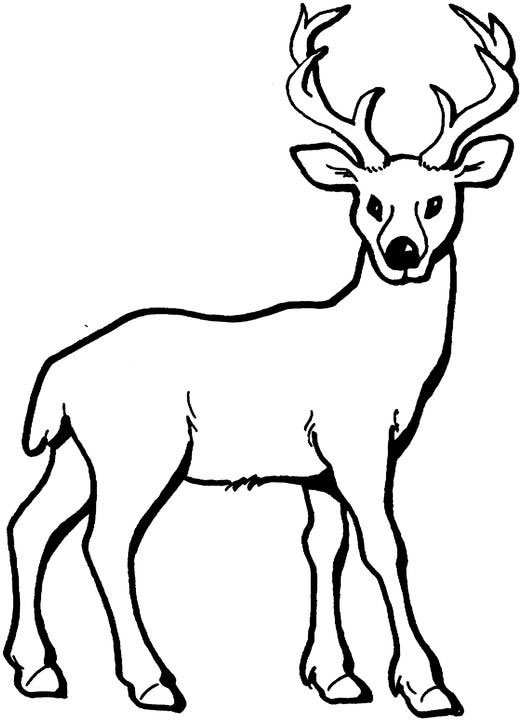Deer Colouring Pages for Kids | Animal Corner