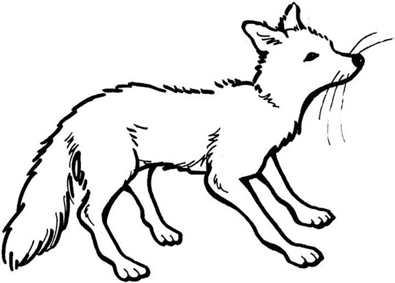 Fox Colouring Pages for Kids | Animal Corner