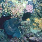 galapagos-eel