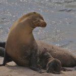 galapagos-sea-lion