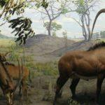 giant-sable-antelope
