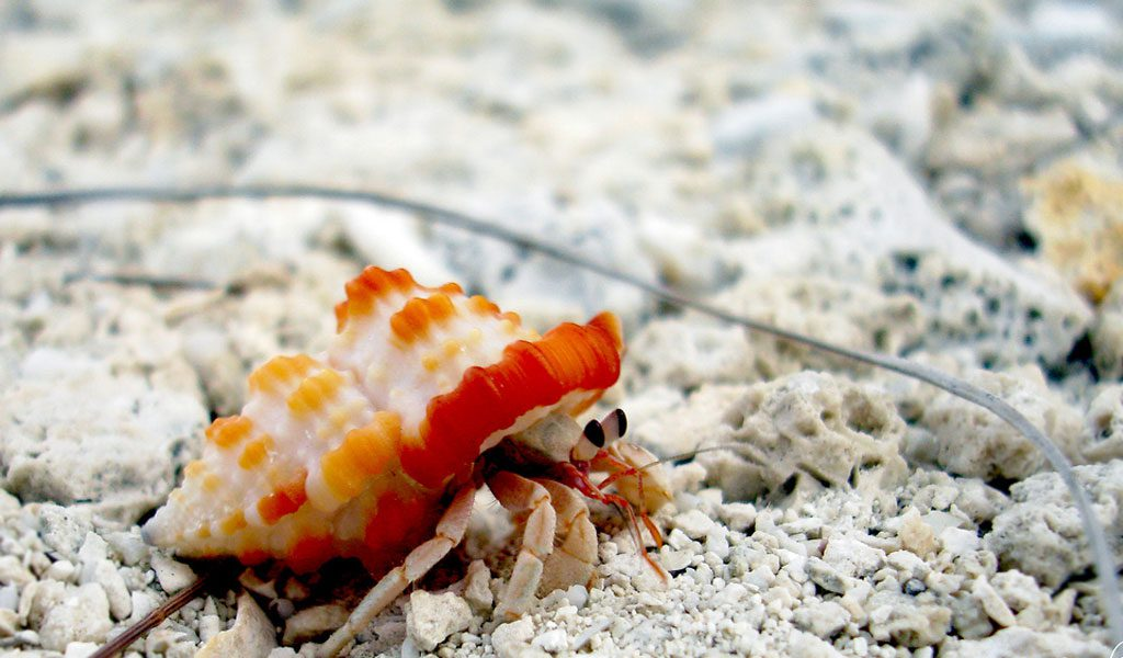 Hermit Crabs - Facts, Information & Pictures