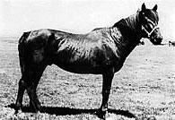 Hequ horse