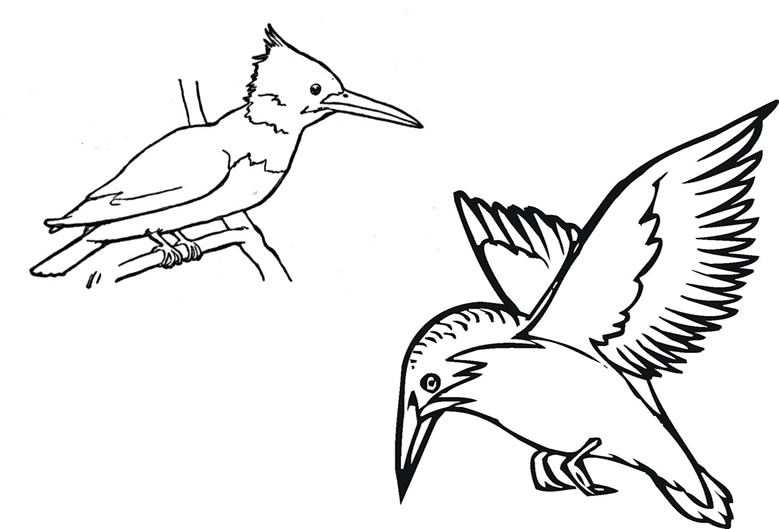 Kingfisher Colouring Page - Free Printable Image