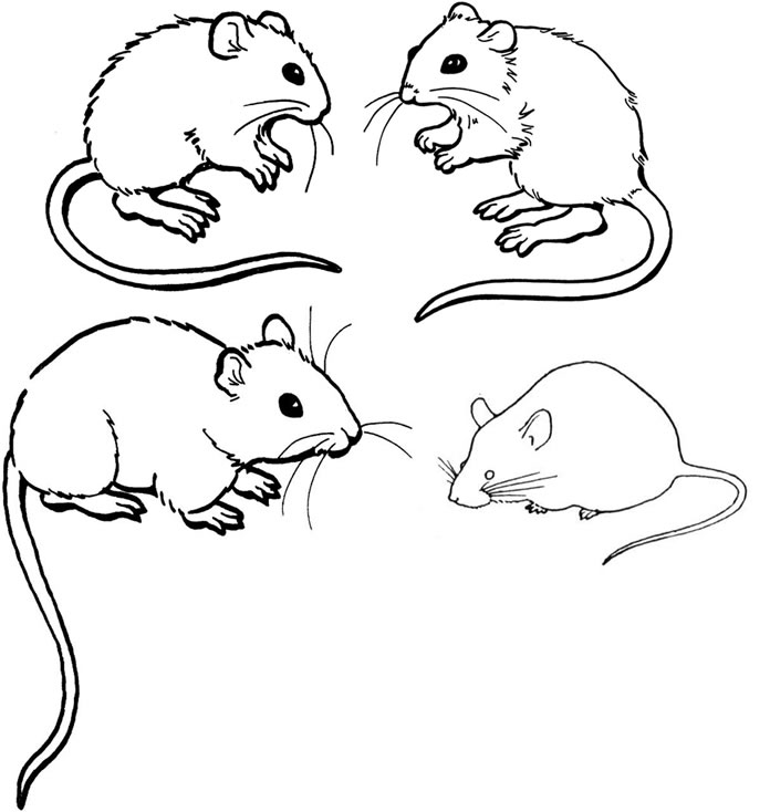 Mice Colouring Pages Free Printable