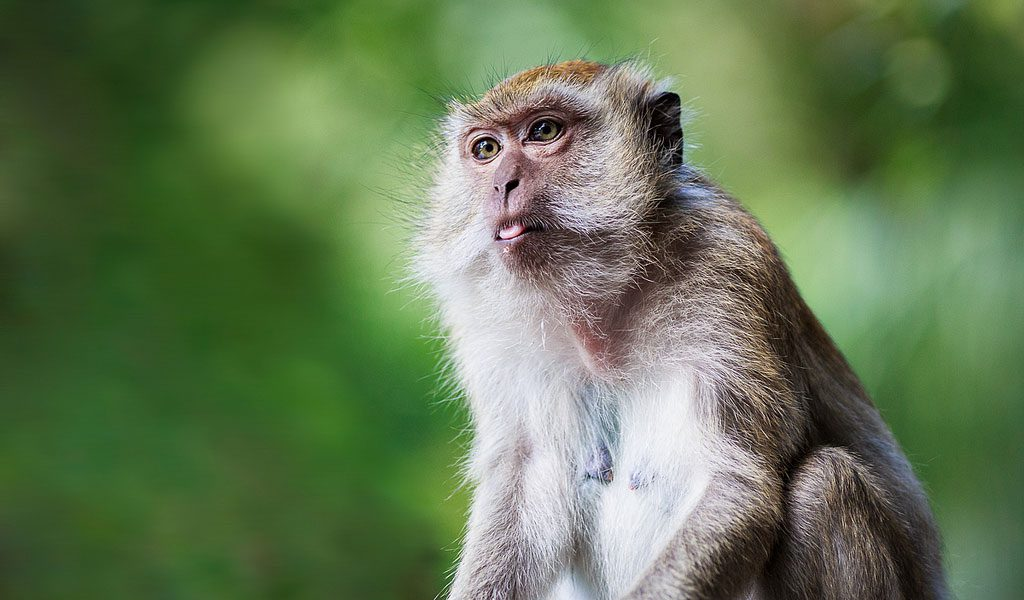 Monkeys - Monkey Facts, Information & Habitat