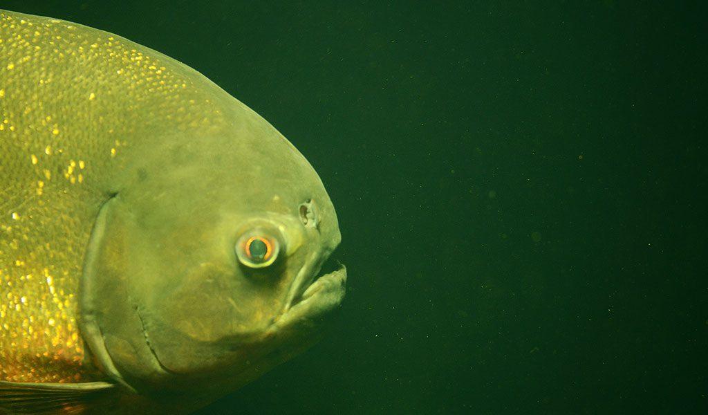 if i were a fish essay