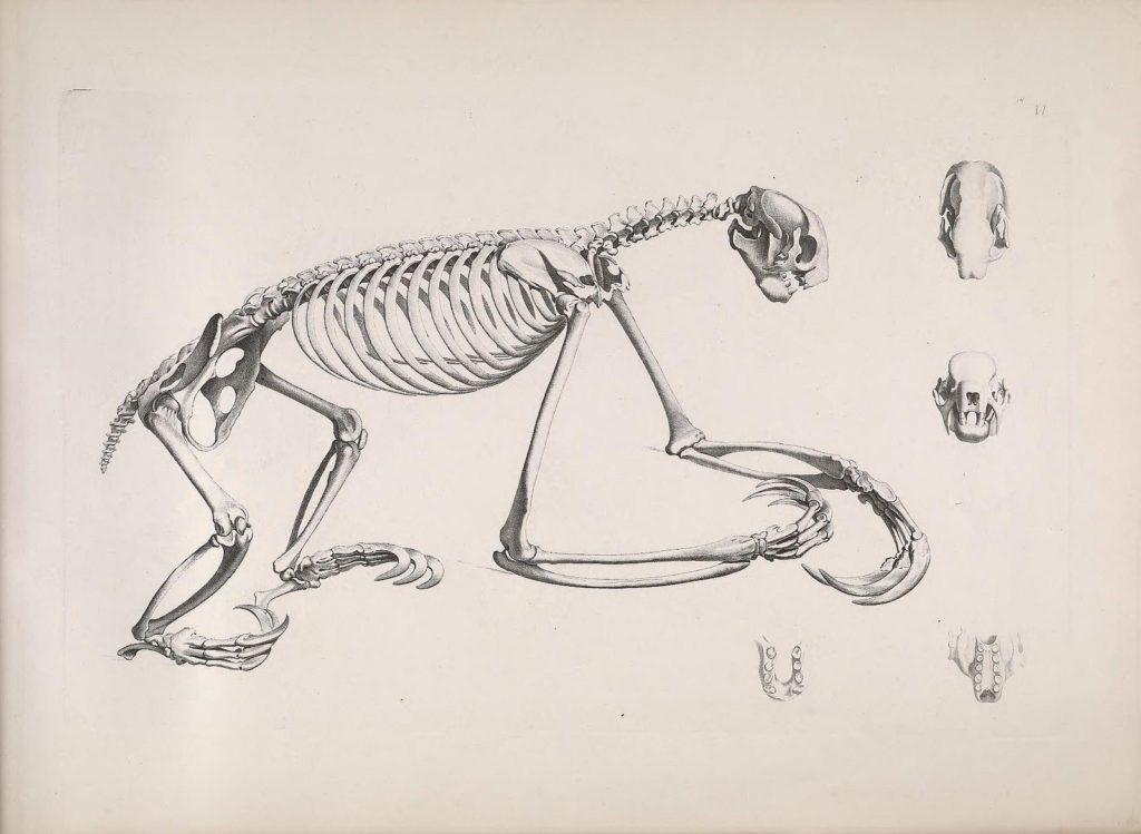 Animal Anatomy - Animal Corner
