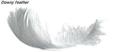 Bird Downy feathers