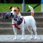 Terrier Mix Breeds