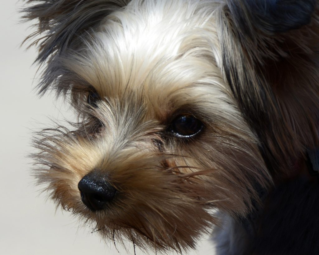 Terrier Mix Breeds - A Guide To The Different Terrier ...