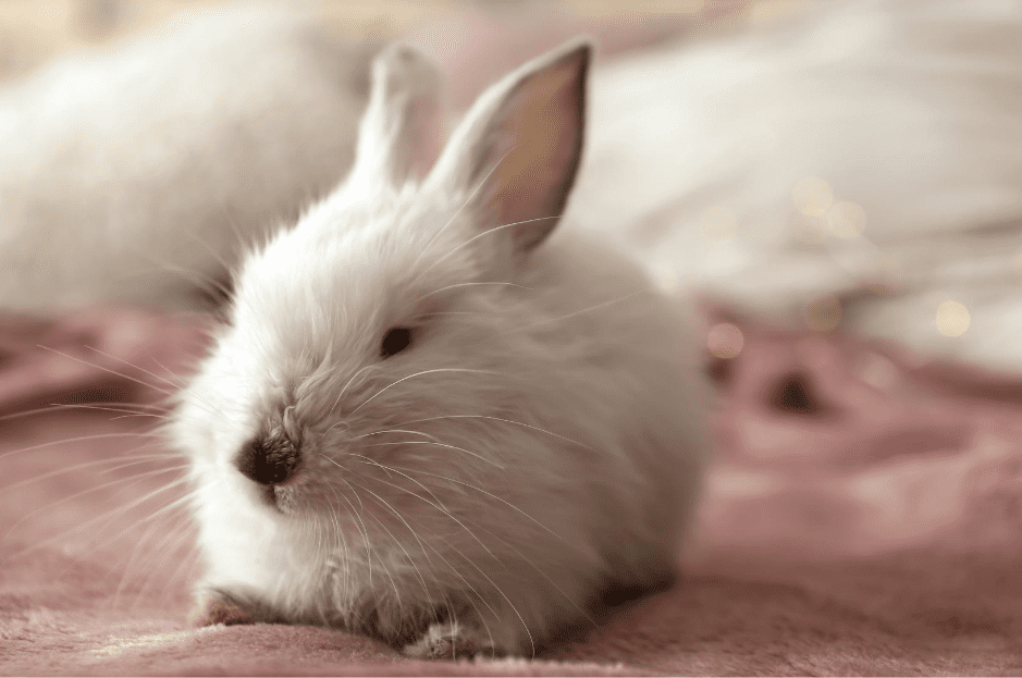 10 Best Rabbit Bedding Reviews For 2021, Can Rabbits Have Red Cedar Bedding