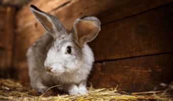 best indoor rabbit hutch