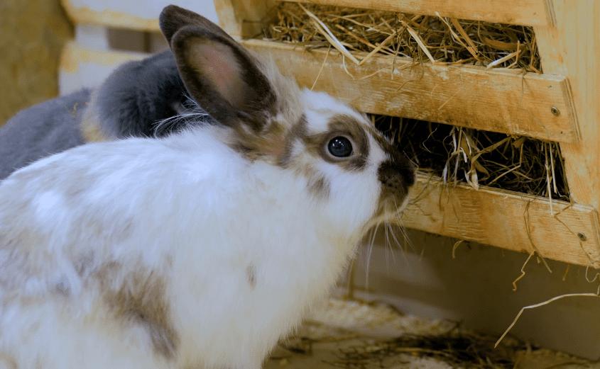 Hay tunnel hay tunnel loft hay feeder bunny hay rack Nibbler HayTunnel hay stand guinea pig small animal hay feeder rabbit