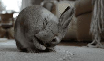 How To Clean A Rabbit