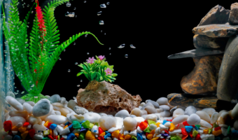 best fish tank decorations