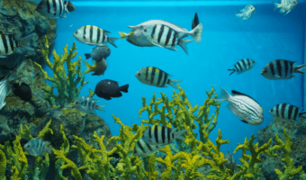 best water conditioner for fish tank