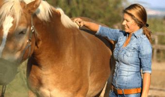 best horse brush