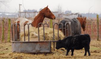 best horse round bale feeder