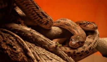 best reptile heater