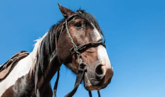 best horse bridle