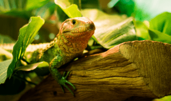 best reptile tank decorations